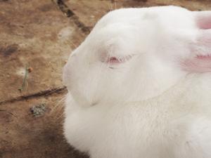 ゆるかわ系のウサギを観察!